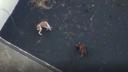 Četiri psa nestalana vulkanskom otoku La Palmi, ostavljena zagonetna poruka