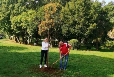 Sutra u Poreču podjela 300 sadnica stabala građanima